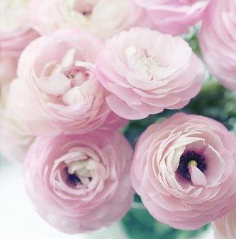 5種超浪漫捧花主要花材!做一個獨一無二的捧花
