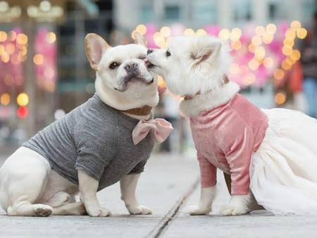 超恩愛狗夫妻拍婚紗!這才是真的讓單身狗閃瞎❤