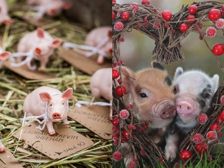 我們一起勾勾叫!從主題到佈置都充滿「小豬」如此可愛又反差萌♥