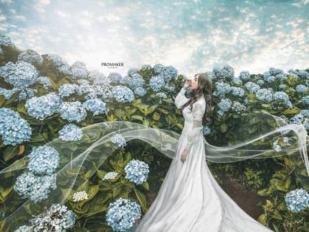 季節限定!前往陽明山高家繡球花 拍場浪漫的「繡球花婚紗」吧❤